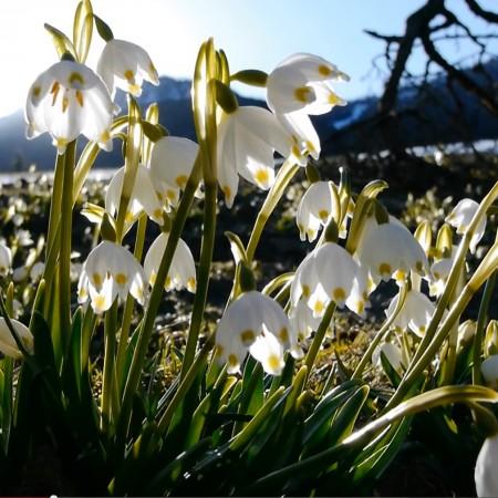 Bells-for-Spring